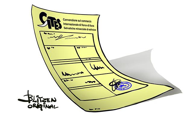 Disegno raffigurante il Documento Cites per Tartarughe di Terra