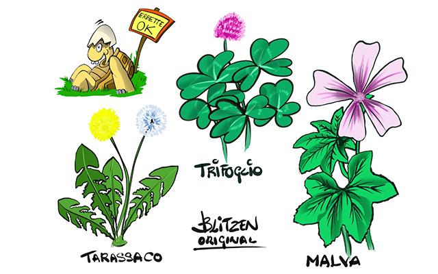 Tartarughe di Terra appena nate - Disegno Blitzen delle erbe che fanno bene alla tartaruga di Terra tra cui Trifoglio, Tarassaco e Malva