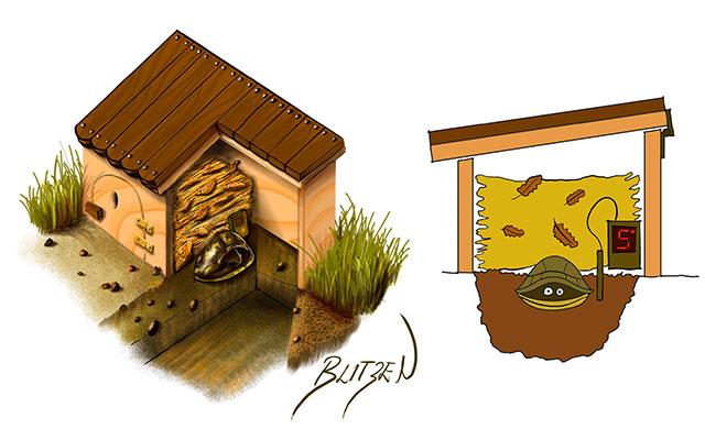 Letargo delle tartarughe di terra la guida completa blitzen for Accessori per terrario tartarughe