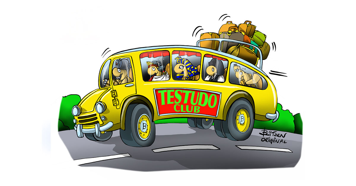 Autobus di diverse specie di Tartarughe di Terra - Disegno Blitzen