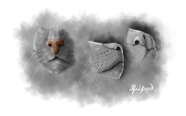 Anatomia del naso di un gatto - Disegno Blitzen