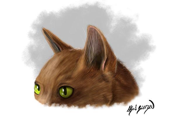 Anatomia degli occhi e orecchie di un gatto - Disegno Blitzen