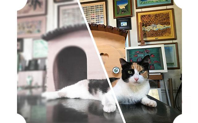 Vista Gatto/Uomo: a destra come vedono gli uomini, a sinistra come vedono i gatti - Disegno Blitzen