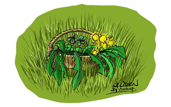 Illustrazione che raffigura un cesto su un prato con dentro l'erba di campo - Blitzen by Vitamina B